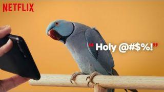 Action Animals Netflix Bird Box